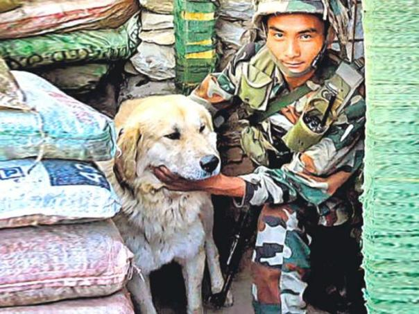 a-dog-with-a-sentry-at-a-post-near-loc-in-poonch_by-rahul-singh_ht_11102015